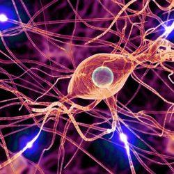 Neurociencias y Neuropsicología Clínica.